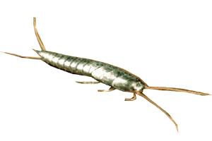 Araign chenilles processionnaires et lepisme poissons d 39 argent insectes - Insectes humidite salle de bain ...